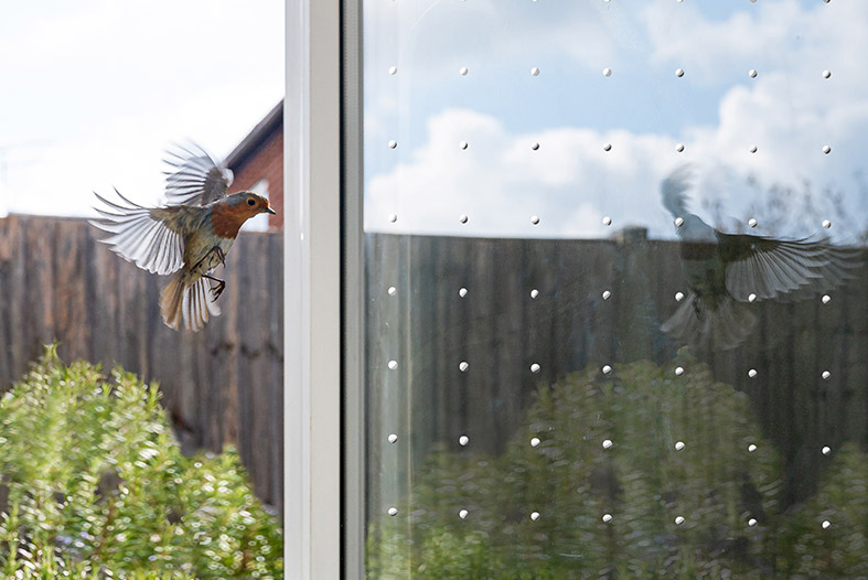 Bird protection on glas and windows